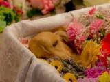 杭州寵物火化殯葬一條龍服務 一對一專業服務