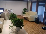 滨江区绿植租摆 西兴办公室植物租赁 长河写字楼花卉租赁 浦沿