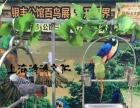 新品种百鸟展活动布展大型百鸟园展出租鹦鹉表演秀价格