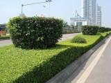郴州专业小区单位绿化养护除草 草皮苗木修剪造型
