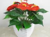 珠海绿植租摆 花卉摆放 绿化养护