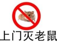 广州灭老鼠公司,广州捉老鼠,彻底灭杀,低价高效