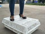 脱温鸡用周转筐 塑料运输鸡笼 塑料运输筐