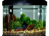 鱼缸保洁清洗 鱼缸过滤系统清洗 鱼池专业清洗