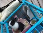 狗笼,可用来养兔子,小型犬!防咬,托盘也是蓝色!
