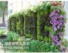 湖南草字头生态植物墙