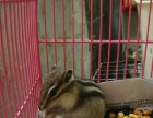 荷兰猪兔子仓鼠刺猬松鼠,已打疫苗