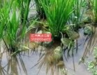 青蛙養殖行業** 湖北枝江匯澤生態農業養殖