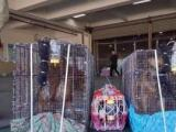 全国连锁8年服务品质宠物托运价格100起