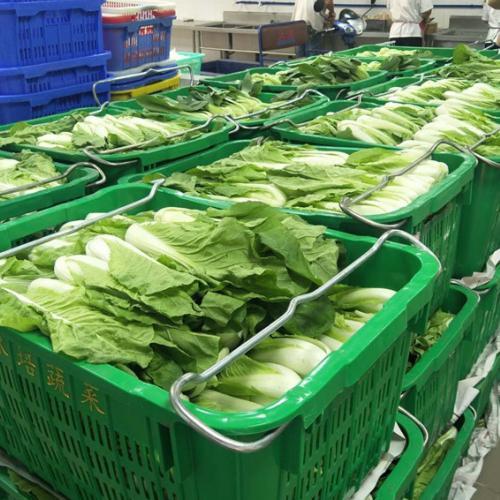 南沙区性价比高的单位蔬菜配送公司
