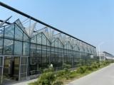 玻璃溫室建設 玻璃溫室大棚承建