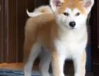 南宁哪里有狗狗卖南宁狗狗多少钱南宁哪里有狗狗领养