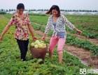 广州黄埔蔬菜水果配送批发 食材配送 粮油配送批发