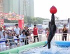 滨州周边租赁海狮表演美人鱼表演珍禽萌宠展览马戏团表演价格