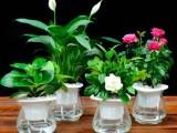 懷化招財貓綠植租售公司 專業從事各種場合的綠植租擺和銷售