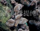 绿森山珍茶业招商加盟