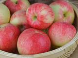 山东冷库苹果出售聊 这几日价格红富士平稳