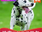 哪有斑点狗出售,斑点狗出售多少钱