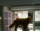 西湖留下四年宠物店整体转让