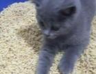 厂家直销玉米猫砂
