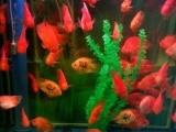 连连有鱼水族馆