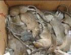 烟威地区专业灭四害,消杀各种害虫。