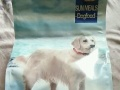 因齐市限犬将狗狗们送走 家里多余天然粮低价转卖。