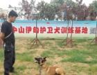 中山伊甸护卫犬训练基地,节假日不涨价寄养、训练半月以上有优惠