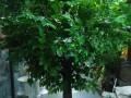 哪里有卖假树室内外大型仿真树定做厂家