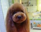 多格普乐思宠物美容工作室