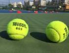三亚天外天网球培训