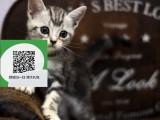 烟台哪里卖虎斑猫 虎斑猫价格 虎斑猫哪里有卖