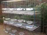 三层12位鸽笼A绍兴三层12位鸽笼A三层12位鸽笼图片