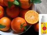 种植的柑橘,预防出现裂果