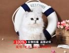 出售金吉拉幼猫长毛猫纯种家养银渐层绿眼宠物猫活体猫咪包健康