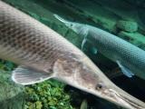 各类观赏鱼 有鹦鹉 龙鱼 锦鲤热带鱼及淡水鱼