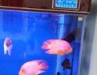 鹦鹉鱼出售转给喜欢的朋友