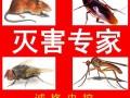 青州灭老鼠寿光灭老鼠临朐灭老鼠除蟑螂服务公司 专业除蟑灭鼠