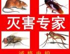 寿光灭老鼠青州灭老鼠临朐灭老鼠 潍坊灭老鼠灭蟑螂公司
