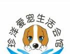 春节期间中大型犬寄养