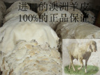 厂家直销供应 白色密度中等羊剪绒100%真羊皮 服装手套靠背专用皮