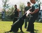 寵物犬 工作犬科目訓練 行為糾正 寄養