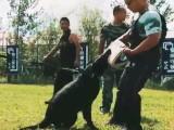 宠物犬 工作犬科目训练 行为纠正 寄养