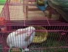 萌兔-小白兔3-4月