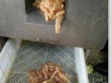 鸭肉切块机 鸭大胸肉切条机器