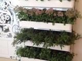 植物净化器 阳台种菜机无土栽培设备 蔬菜种植机