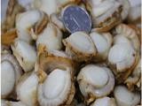 大连特产冷冻扇贝肉海鲜野生半壳扇贝肉蒜蓉粉丝新鲜贝类烧烤食材