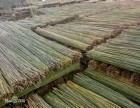 北京竹竿哪里有卖仿真竹竿价格