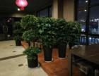 重庆轩屺花木植物租赁,办公室植物租摆