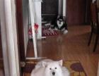 爱心家庭式寄养狗狗